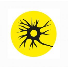 Máster en Neurociencia Experimental y Clínica