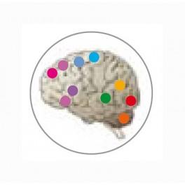 Master en Psicobiología y Neurociencia Cognitiva